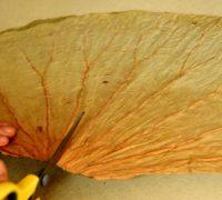frunze-de-lotus (2)